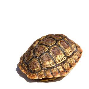 David Brooks disappears behind tortoise shell frames. Where's David Brooks?
